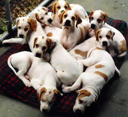 dog breeding business