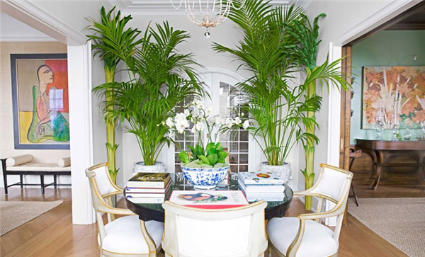 Cheap décor Ideas to make your home a tropical paradise - Housing Corner